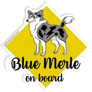 Pegatina Border Collie Blue Merle on board o Blue Merle a bordo